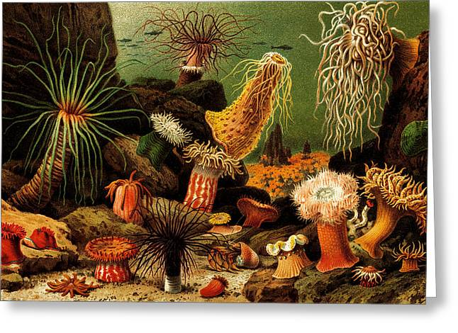 Beach Greeting Cards - Sea Magic Underwater Anemones  - At the Beach America Greeting Card by Private Collection