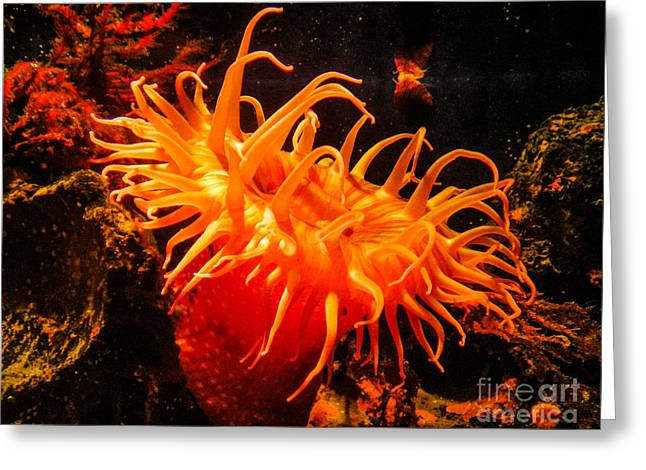 Sea Anenome Greeting Cards - Sea Anenome Greeting Card by Charlene Gauld