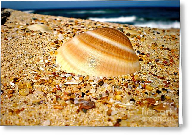 Breaking Surf Greeting Cards - Sea beyond the Shell Greeting Card by Kaye Menner