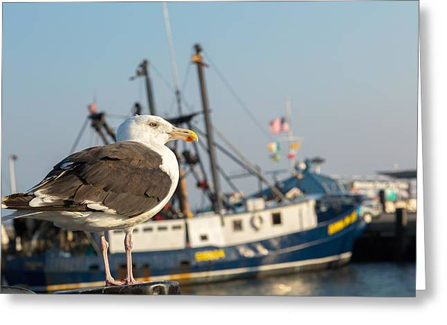 Provincetown Greeting Cards - Sea Bird Greeting Card by Bill  Wakeley