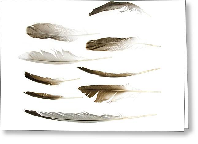 Maine Shore Greeting Cards - Sea Bird Feathers Greeting Card by Jennifer Booher