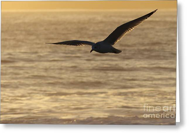 Sea Bird in Flight Greeting Card by Paul Topp