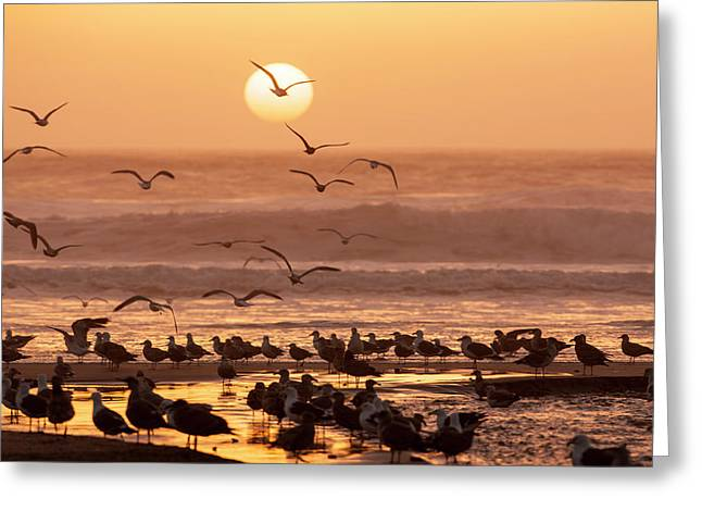 Sea Birds On Beach Greeting Card by Tom Norring