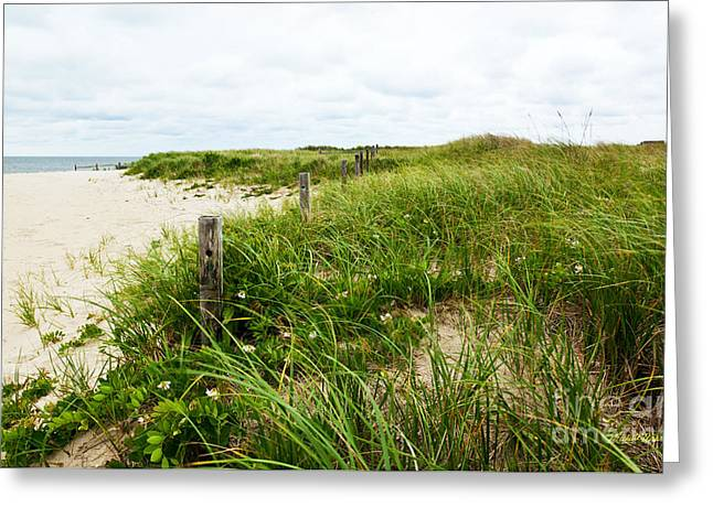 Sand Fences Greeting Cards - Sea Breeze Greeting Card by Michelle Wiarda