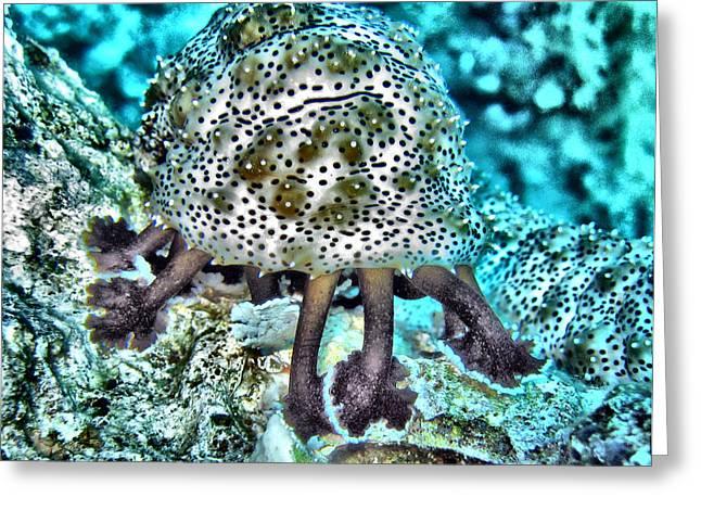 Undersea Photography Digital Art Greeting Cards - Sea Cucumber Greeting Card by Roy Pedersen