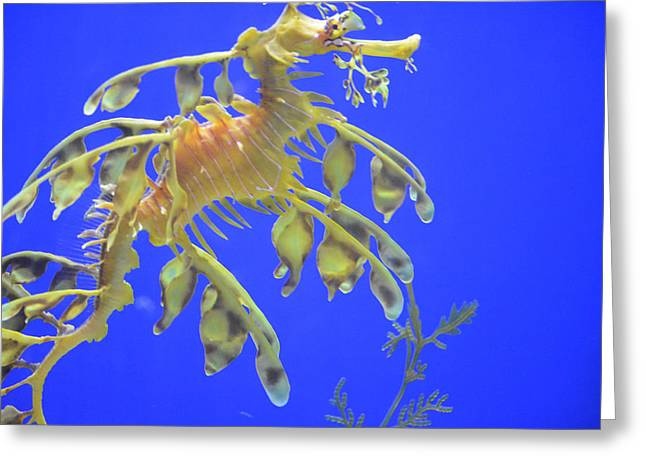 Rare Moments Greeting Cards - Sea Dragon Greeting Card by Randy King
