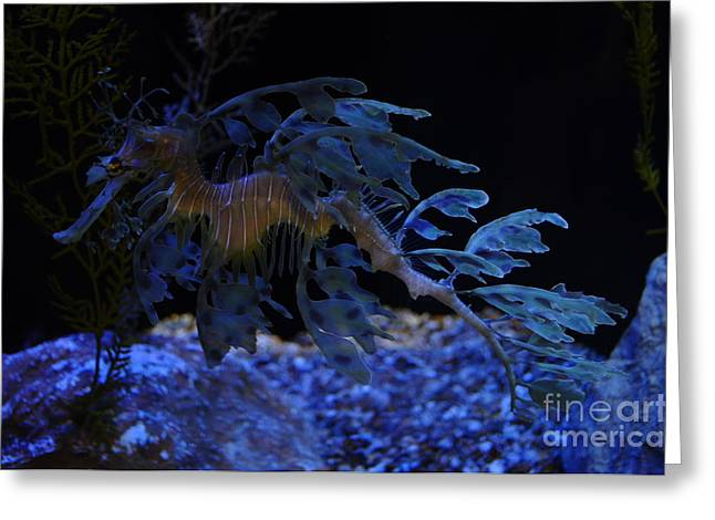 Leafy Sea Dragon Greeting Cards - Sea Dragon Swim Greeting Card by Mandi Hill
