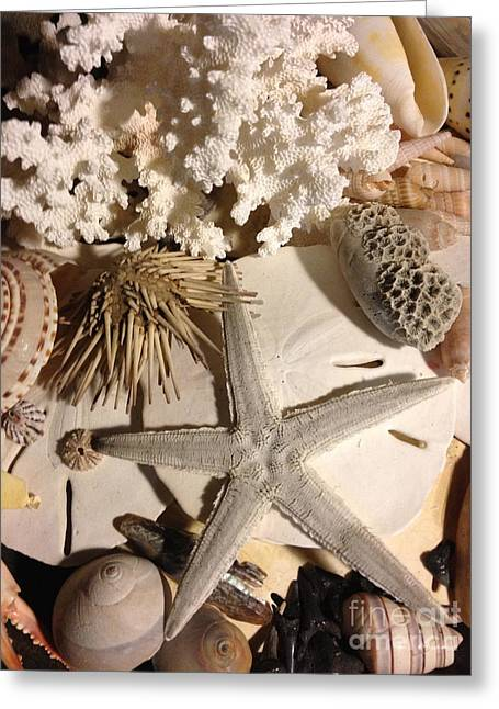 Breezy Greeting Cards - Sea Finds Greeting Card by M West