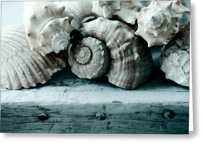 Shell Art Greeting Cards - Sea Gifts Greeting Card by Bonnie Bruno