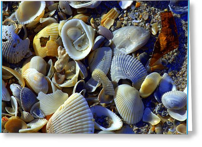 Shell Texture Greeting Cards - Sea Glass and Shells Greeting Card by Mindy Newman