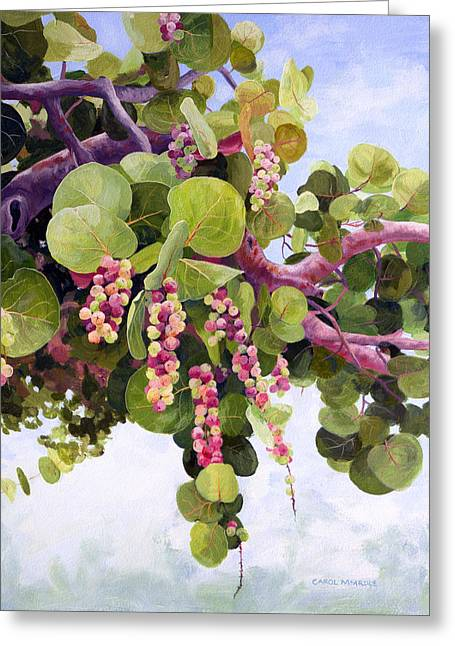 Recently Sold -  - Fruit Tree Art Greeting Cards - Sea Grapes in Soft Light Greeting Card by Carol McArdle