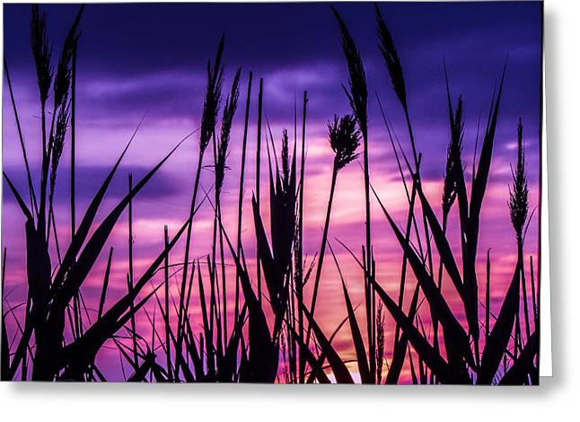 Breezy Greeting Cards - Sea Grass Greeting Card by Constance Carlsen