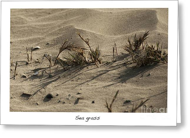 Sea Grass In The Sand Greeting Cards - Sea Grass Greeting Card by Artist and Photographer Laura Wrede