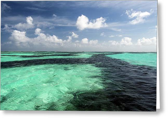Sea Grass Meadows In The St Joseph Atoll Greeting Card by Peter Chadwick