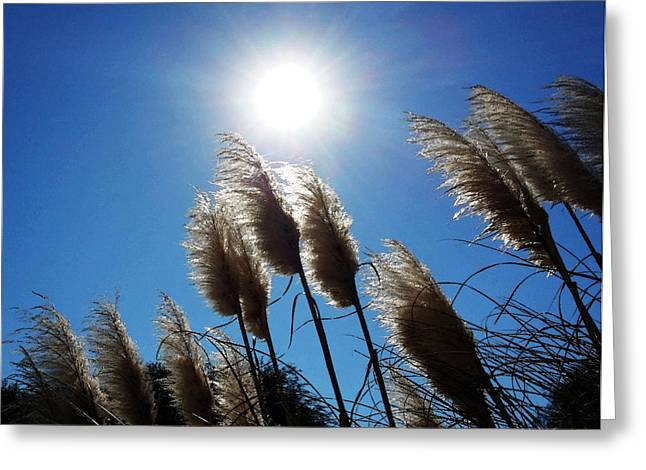 Pampas Grass Greeting Cards - Sea Grass Shimmer - Coastal Art By Sharon Cummings Greeting Card by Sharon Cummings