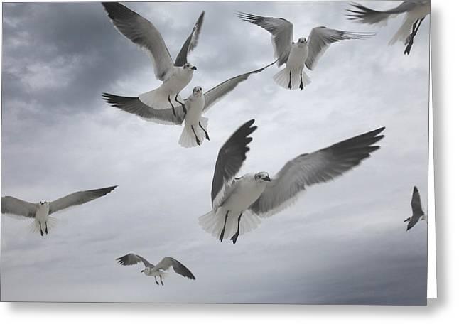 Sea Birds Greeting Cards - Sea Gull Aggression Greeting Card by Joseph G Holland