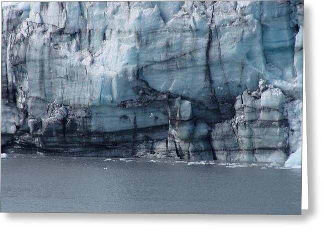 Juneau Park Greeting Cards - Sea Gull and Glacier Greeting Card by Phil Welsher