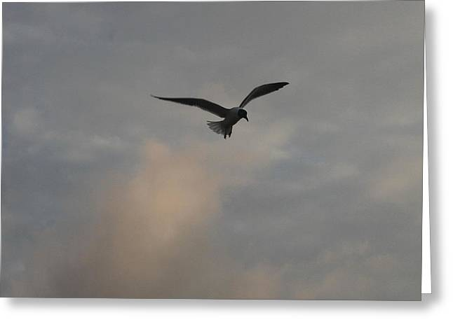 Sand Greeting Cards - Sea Gull in Clouds Greeting Card by Cathy Lindsey