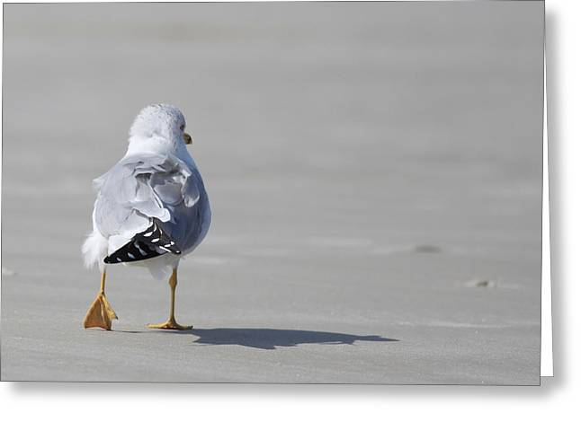 Sea Gulls Greeting Cards - Sea Gull Greeting Card by Kitty Ellis