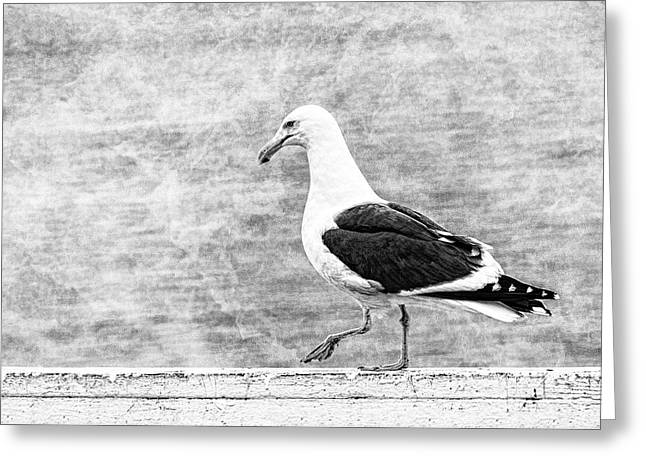 Santa Cruz Pier Greeting Cards - Sea Gull on Wharf Patrol Greeting Card by Jon Woodhams
