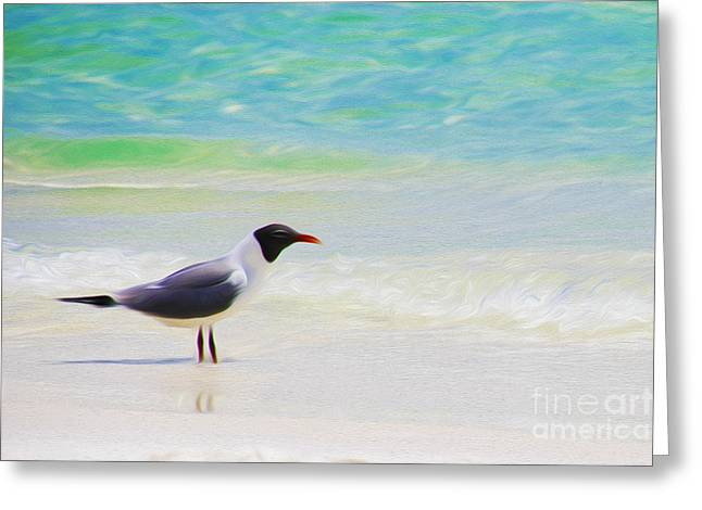 Abstract Digital Mixed Media Greeting Cards - Sea Gull Greeting Card by Phil Floyd
