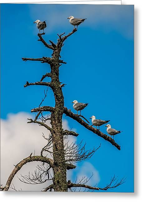 Peaceful Scene Greeting Cards - Sea Gulls Hangin Out Greeting Card by Paul Freidlund