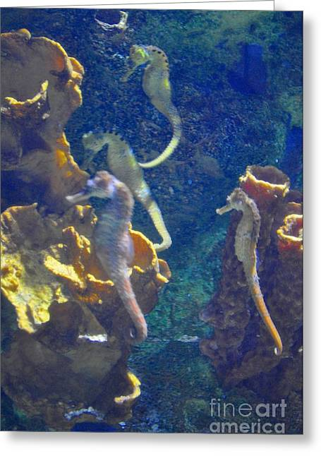 Sea Greeting Cards - Sea Horses  Greeting Card by Mandy Judson