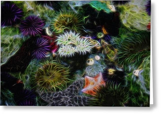 Sea Life Digital Greeting Cards - Sea Life 2 Digital Art Greeting Card by Ernie Echols