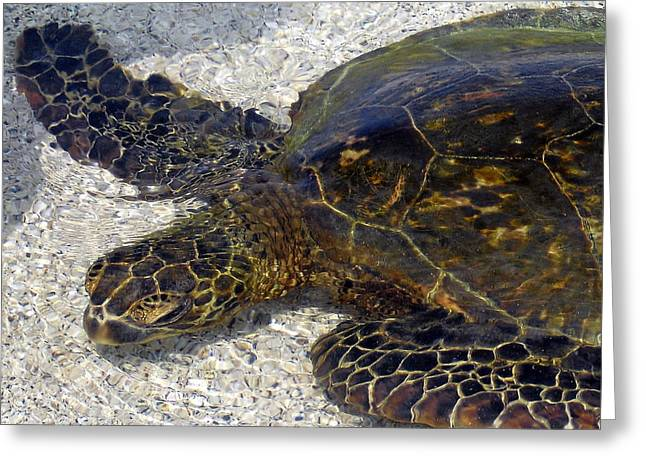 Sea Life Pictures Greeting Cards - Sea Life Greeting Card by Athala Carole Bruckner