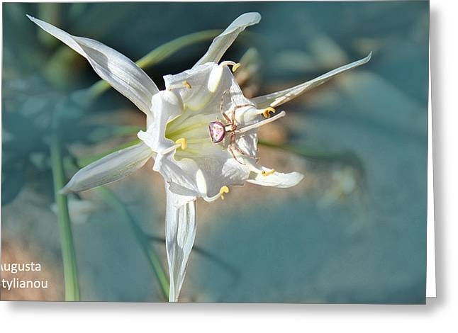 Sea Moon Full Moon Greeting Cards - Sea Lily Greeting Card by Augusta Stylianou