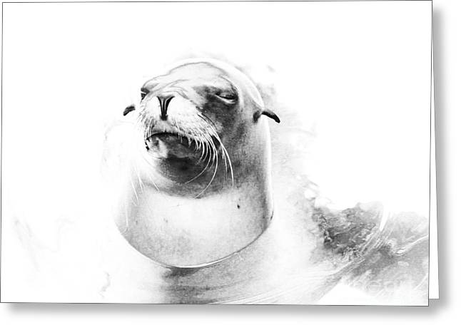 Californian Greeting Cards - Sea Lion Abstract Greeting Card by TN Fairey