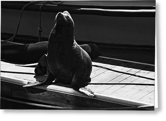 Sea Platform Greeting Cards - Sea Lion At Pier 39 Greeting Card by Aidan Moran