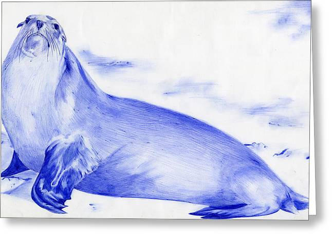 Sea Lions Drawings Greeting Cards - Sea Lion by Odessa Van Order 12th grade Greeting Card by California Coastal Commission