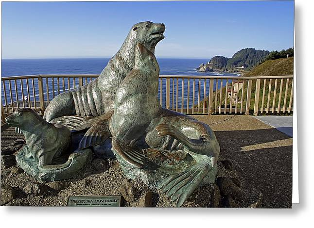 California Sea Lions Greeting Cards - Sea Lion Caves - Oregon Greeting Card by Daniel Hagerman