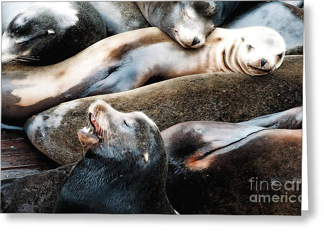 Sea Lions Greeting Cards - Sea Lion Dreams Greeting Card by Gwyn Newcombe