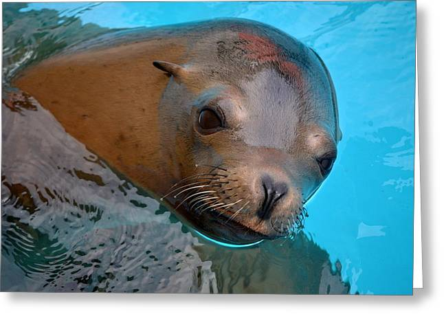 Sealions Greeting Cards - Sea Lion Greeting Card by Mg Rhoades
