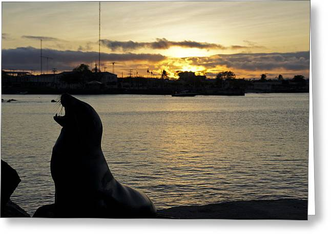 Sea Lions In The Ocean Greeting Cards - Sea Lion on San Cristobal in the Galapagos Islands Greeting Card by Brian Kamprath