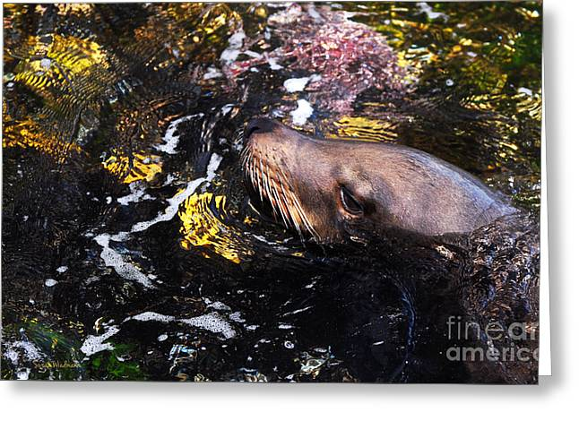 California Sea Lions Greeting Cards - Sea Lion Posing for a Headshot Greeting Card by Susan Wiedmann