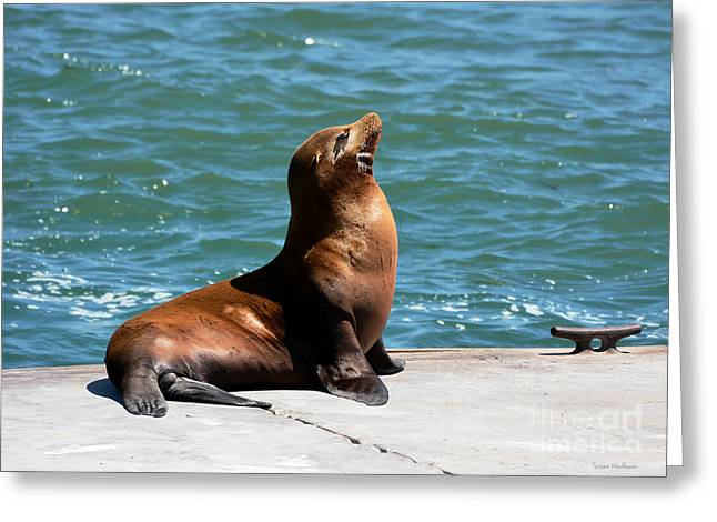Moss Landing Boats Greeting Cards - Sea Lion Posing on Boat Dock Greeting Card by Susan Wiedmann