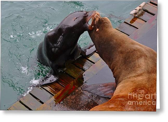 Sea Greeting Cards - Sea Lion vs Seal Greeting Card by Mandy Judson