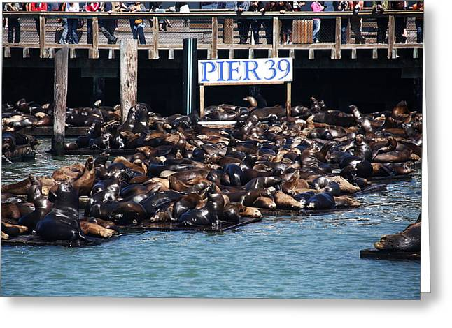 Sea Platform Greeting Cards - Sea Lions At Pier 39 Greeting Card by Aidan Moran