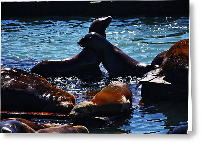 Sea Lions In San Francisco Bay Greeting Card by Aidan Moran