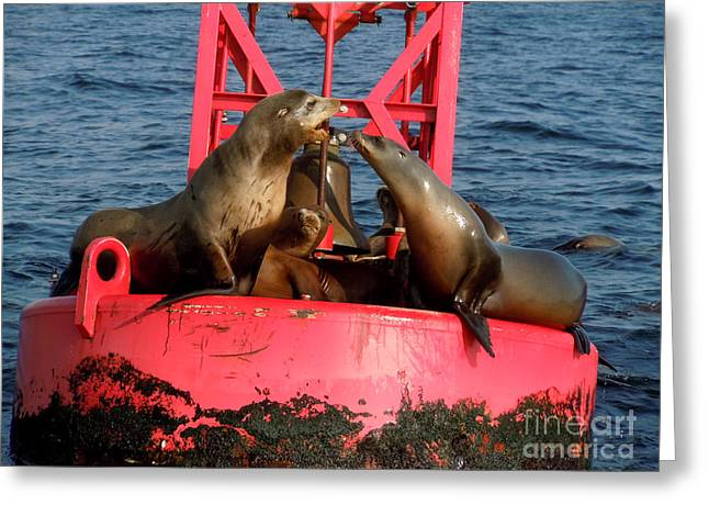 California Sea Lions Greeting Cards - Sea Lions on the Old Point Dume Buoy Greeting Card by Suzanne Guldimann