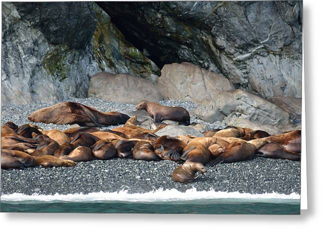 Sea Lions On The Sea Shore Greeting Card by Patricia Twardzik