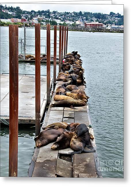 California Sea Lions Greeting Cards - Sea Lions Sleeping Greeting Card by Robert Bales