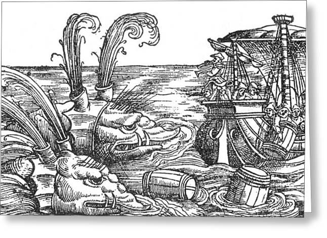 Marine Creatures Greeting Cards - Sea Monsters Or Whales, 16th Century Greeting Card by Photo Researchers