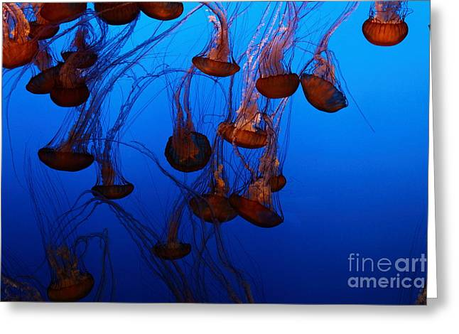 Snorkel Greeting Cards - Sea Nettle Jelly Fish 5D24939 Greeting Card by Wingsdomain Art and Photography