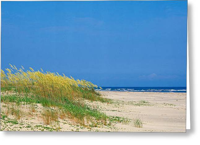 Sea Oats Greeting Cards - Sea Oat Grass On The Beach, Charleston Greeting Card by Panoramic Images