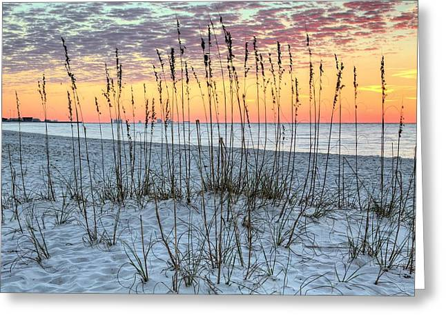 Surises Greeting Cards - Sea Oat Sunrise Greeting Card by JC Findley