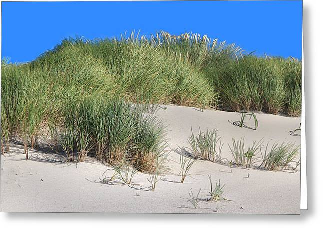 Sand Pattern Greeting Cards - Sea Oats and Grass and Sand Dunes  Greeting Card by Donna Haggerty